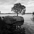 Tree in the rock by pennyswork