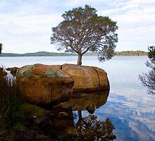 Tree in Rock -  version2 by pennyswork