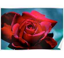 My Red Beauty Rose... Poster