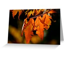 Changing Colors Greeting Card