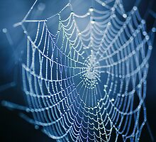 The Web by Andreas Stridsberg