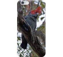 The Gang Gang Cockatoo iPhone Case/Skin