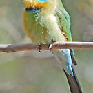 Rainbow Bee-Eeater, Alice Springs, Northern Territory, Australia by Adrian Paul
