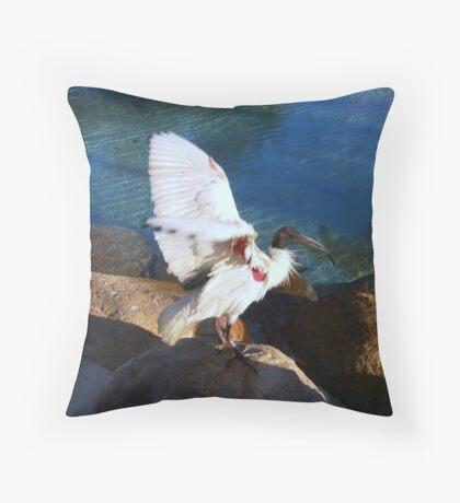 Australian White Ibis Throw Pillow
