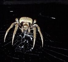 Huntsman at night by Stephen Quennell