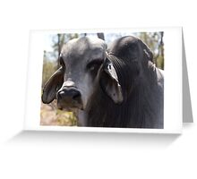 Cape York- Brahman Beast Greeting Card