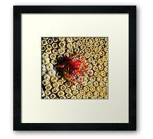 Cryptic Teardrop Crab Framed Print