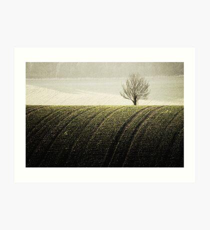 Rural Carpet Art Print