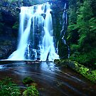 Wes Beckett falls in the Tarkine in far nor west Tasmania, Australia by phillip wise