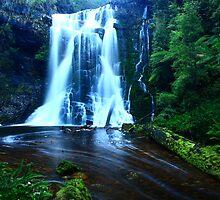 Wes Beckett falls in the Tarkine in far nor west Tasmania, Australia by phillip wise