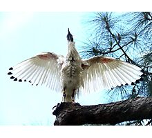 Ibis Cleaning Photographic Print
