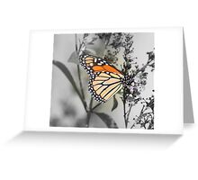 Monarch Miracle  Greeting Card