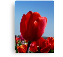 Happy Red Tulip Canvas Print