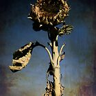 The dead sunflower by creativemonsoon