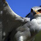 Birds Of Prey by Daniel Mulcahy
