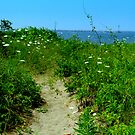 Dune Trail by mooner1