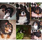 Charlie Girl & Poppy  Collage by AnnDixon