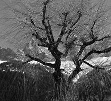 Chamonix Tree by petegrev