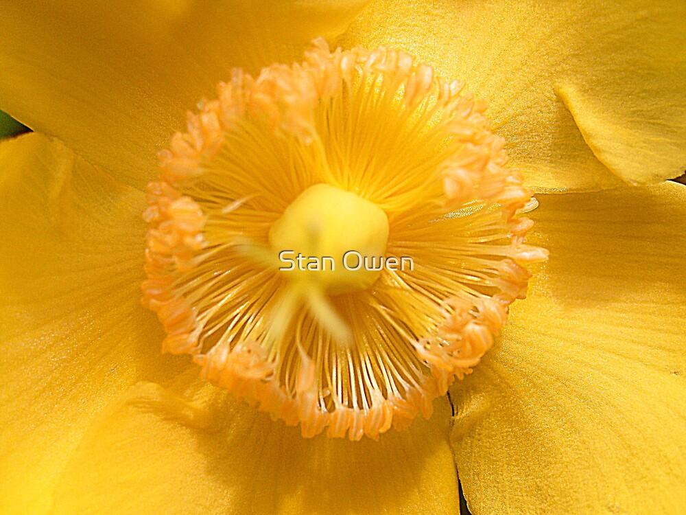 Yellow Wild Flower by Stan Owen