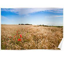 Poppys in a Wheat Field Poster