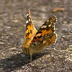 Painted Lady by Trevor Kersley