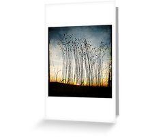 Forgotten flax at dawn Greeting Card