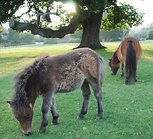 Mother and Baby Shetland Ponies by petegrev