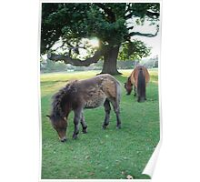 Mother and Baby Shetland Ponies Poster