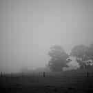 Field by Harley