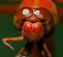 Sharp Red Eyes by Dennis Jones - CameraView
