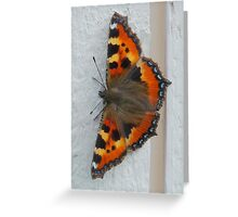 Drying its Wings Greeting Card