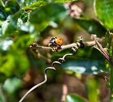 Mini Bug World - Searching for Lunch by Bradley Old