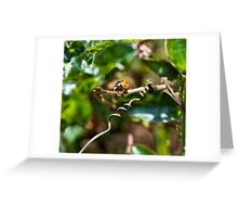 Mini Bug World - Searching for Lunch Greeting Card