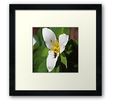 Trillium With Beatles Framed Print