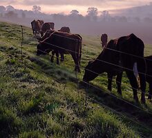 Dawn Herd by Simon Pattinson