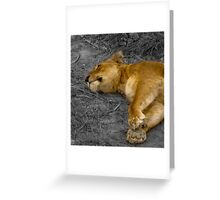 the great life of a big cat Greeting Card