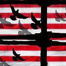 American Scafold by Carolyn Venditto