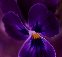 Petal Poppin Purple by Diane Schuster