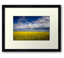 Carpet of Sunshine Framed Print