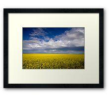Carpet of Sunshine Framed Print