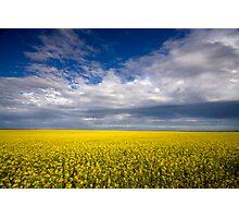 Carpet of Sunshine Photographic Print