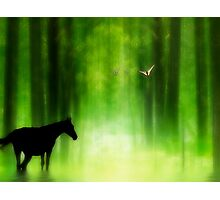 Mystical Woodland Photographic Print