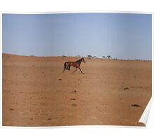 Brumby in Outback Australia Poster