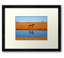 Brumby at water Framed Print