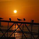 Awaiting the Sunset by Jonathan Sullivan