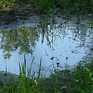 Reflections in a Puddle by MaeBelle
