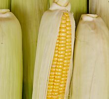 Corn on the cob by Jeffrey  Sinnock