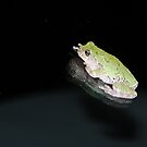 Green Tree Frog 1 by Anne Smyth