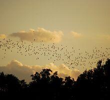 Bats by Jennifer Suttle