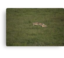 Flying Coyote Canvas Print